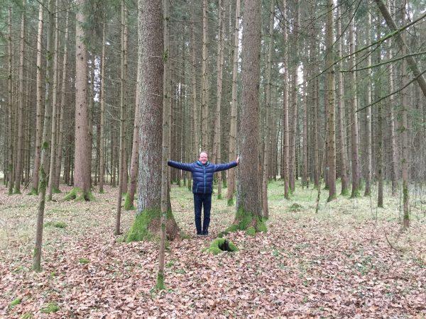 Bäume des Schamanen