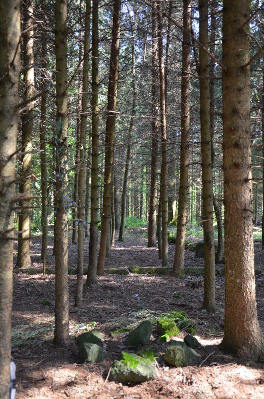 Waldweg bei Hüter des Lebens mit Urturm